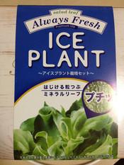 Iceplant