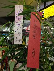 Monogatari2nd_tanabata2